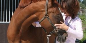 Ingrid De Boelpaep - Ostéopathie équine