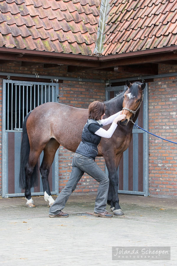 Ingrid De Boelpaep – Steenhuffel - Sportsmassage for horses