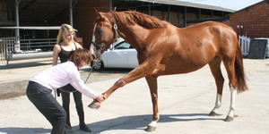 Ingrid De Boelpaep – Steenhuffel - Osteopath for horses